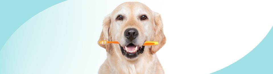 dentaldog